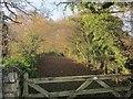 SX2863 : Old driveway, Trelawny by Derek Harper