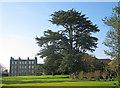 TF4666 : Cedar Tree at Gunby Hall by Trevor Rickard