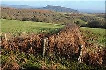 SO2718 : Field boundary, Twyn Gwyn by Philip Halling