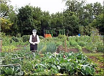 TF1020 : Allotment scarecrow at Bourne, Lincolnshire by Rex Needle