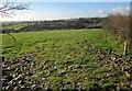 SX2968 : Sheep pasture above Tiddy valley by Derek Harper