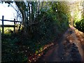 SU6513 : Looking uphill on Pitt Hill Lane from end of footpath by Shazz