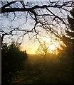 TQ1872 : Midwinter sunset, seen from the scarp south of Pembroke Lodge by Stefan Czapski