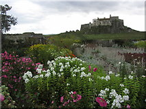 NU1341 : Holy Island - Gertrude Jekyll Gardens near Lindisfarne Castle by Colin Park