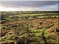 SX2670 : Moorland near Minions by Derek Harper