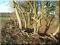 SU2473 : Earthworks, Lewisham Castle by Vieve Forward