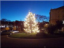 SZ0891 : Bournemouth: the Town Hall Christmas tree by Chris Downer