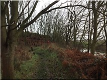 TM5075 : Footpath along the edge of Southwold Common and Town Marshes by ruth e