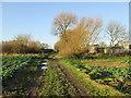 TA0422 : Pasture  Road  South  (track)  entering  Barton by Martin Dawes