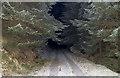 NN9704 : Forestry near Glen Sherup by William Starkey