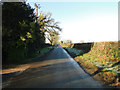 TG1027 : Low sun on Heydon Road by Adrian S Pye