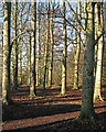 TL4854 : The Beechwoods at the end of the year by John Sutton