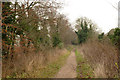 TL4954 : Byway along the old Roman Road on Gog Magog Hills by Alan Murray-Rust