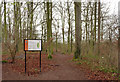 TL4854 : Beechwoods Nature Reserve by Alan Murray-Rust