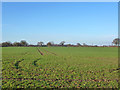 TL6825 : A flat landscape by Robin Webster
