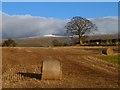 NY6529 : Farmland, Milburn by Andrew Smith
