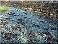 SJ7661 : Molehills by Stephen Craven