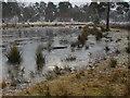 SU9555 : Frozen pond, Pirbright Common by Alan Hunt