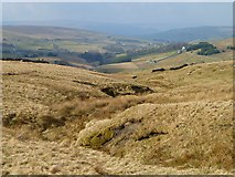 NY7844 : Rough pasture above Nenthead, Alston by Andrew Smith