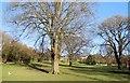 TQ3204 : Queens Park - Jan 2015 by Paul Gillett