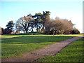 SU1870 : Bell barrow, Marlborough Common by Vieve Forward