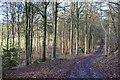 NT4326 : Woodland track, Carterhaugh by Jim Barton