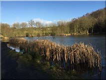 SJ8149 : Apedale Country Park: Burley Pools by Jonathan Hutchins