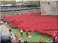 TQ3380 : Poppies at the Tower 3 by Bill Nicholls