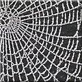 SK2625 : Web of frost by Alan Murray-Rust