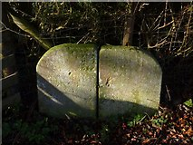 ST5038 : Chalice Orchard benchmark, Glastonbury by Becky Williamson
