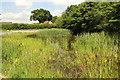 TF3070 : Greetham village pond by Richard Croft