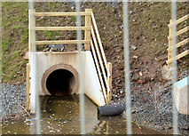 J3673 : Drain, Orangefield Park, Belfast (January 2015) by Albert Bridge