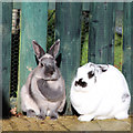 TQ4714 : Rabbits at Raystede by Oast House Archive