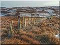 NZ6011 : Codhill Heights by Mick Garratt