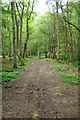 TQ2238 : Footpath 1496/1 in the woods, 2007 by Robin Webster