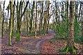 SN0513 : Minwear Woods  by Deborah Tilley