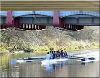 SK5803 : Rowers passing under the Upperton Road bridge by Mat Fascione