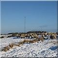 NS8462 : Sheep in snow, Kirk o' Shotts by Alan O'Dowd