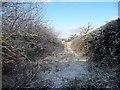 SJ4263 : Snowy hedges, west of Sandy Lane by Christine Johnstone