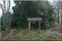 ST5906 : Murderer's Lane, Stock Wood by Becky Williamson