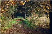 TL1947 : Track to Biggleswade Common by John Winder