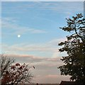 SJ9593 : The moon in the morning sky by Gerald England