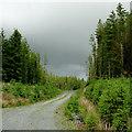 SN7358 : Forestry road on Esgair Fawr, Ceredigion by Roger  Kidd