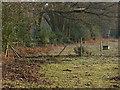 SU9756 : Paddock edge near Blackhorse Road by Alan Hunt