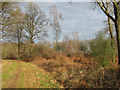 TG1622 : Footpath from Haveringland Road to Holt Road (B1149) by Evelyn Simak