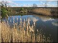 SX9779 : Pond near Eastdon by Derek Harper