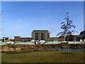TQ4175 : Kidbrooke Village: new phase starting by Stephen Craven