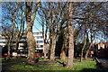 SK9771 : St Martin's Graveyard, Beaumont Fee, Lincoln by David Hallam-Jones