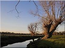 TQ2173 : Pollard willows by Beverley Brook in January by Stefan Czapski