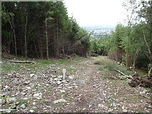 J3630 : Clearing in the Donard Forest resulting from pipe laying for the Donard HEP pipeline by Eric Jones